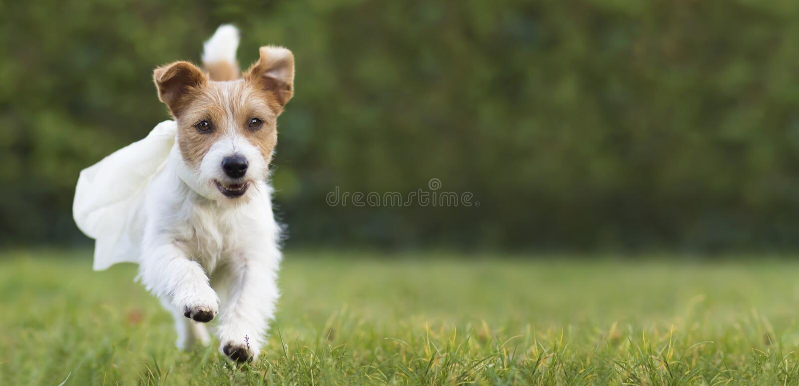 Flying happy super hero pet dog puppy playing in the grass, web banner. Flying happy super hero cute pet dog puppy playing in the grass, web banner with blank stock images