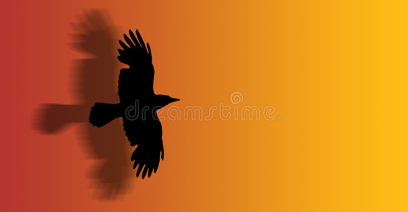 Download Flying hawk stock illustration. Image of evening, songbird - 2891959