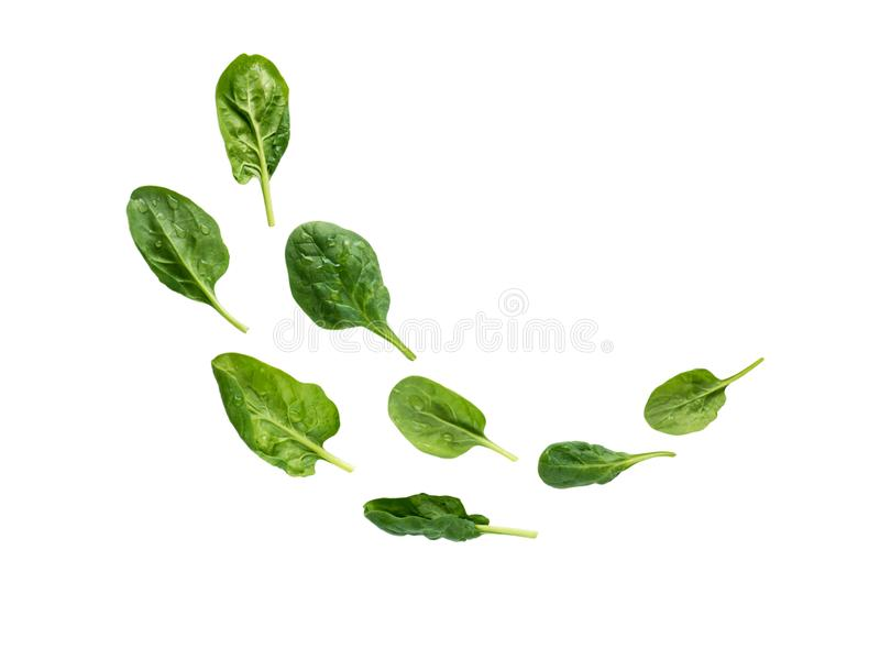 Flying heap of green spinach leaves stock images