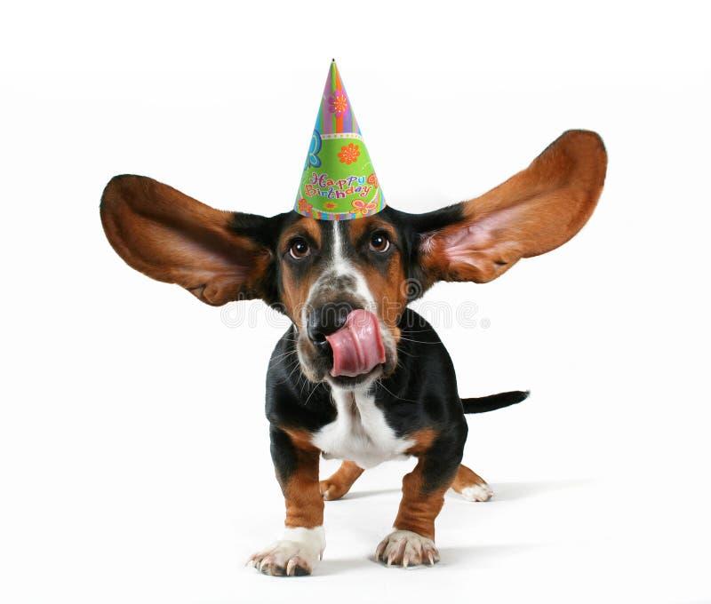 Flying hound royalty free stock image