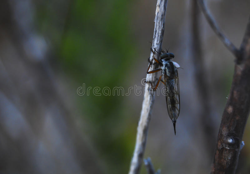 Flying insect stock photos