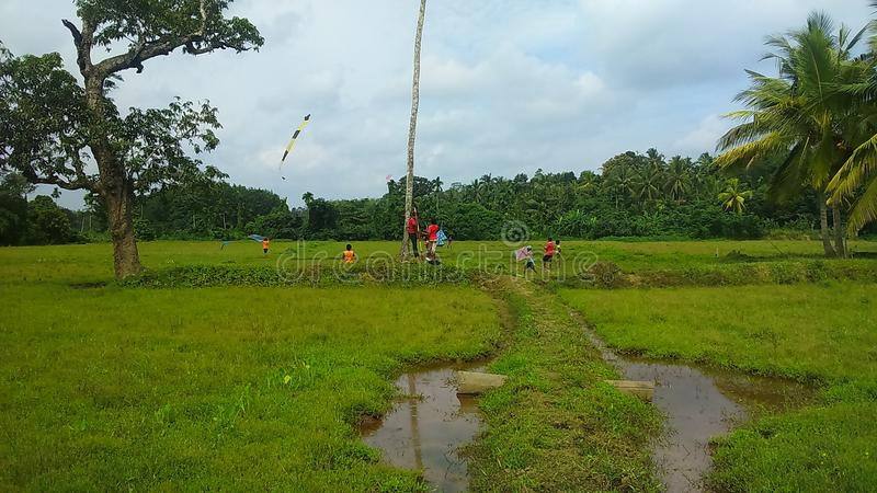 Flying kites in a paddy field stock photo