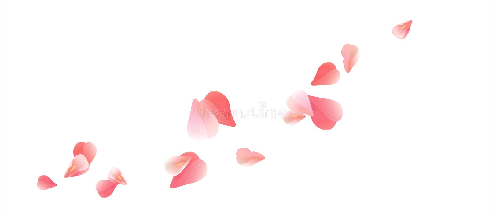 Flying light Pink Red petals isolated on white background. Roses petals. Falling Cherry flowers. Vector EPS 10 cmyk vector illustration