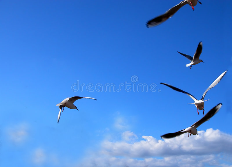 Flying Message Royalty Free Stock Photography