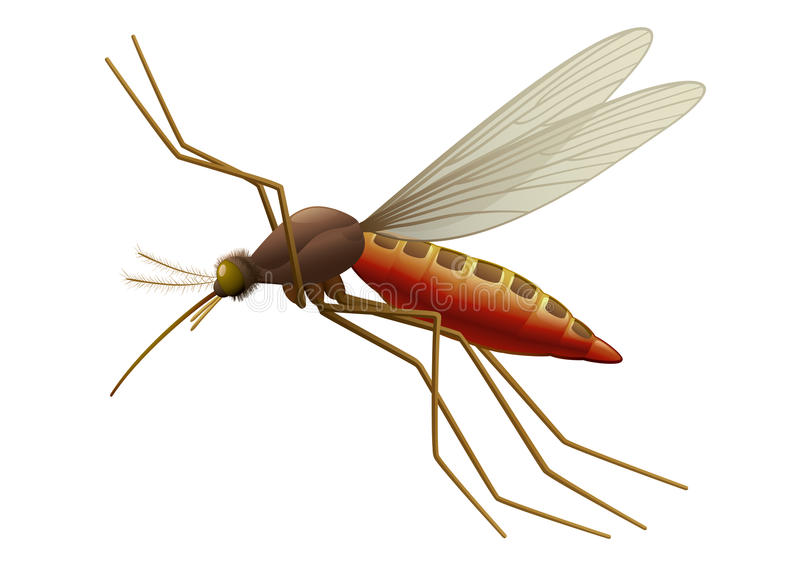 Flying Mosquito. Vector illustration of Flying Mosquito, blood sucking insect. Full compatible. Created with gradients