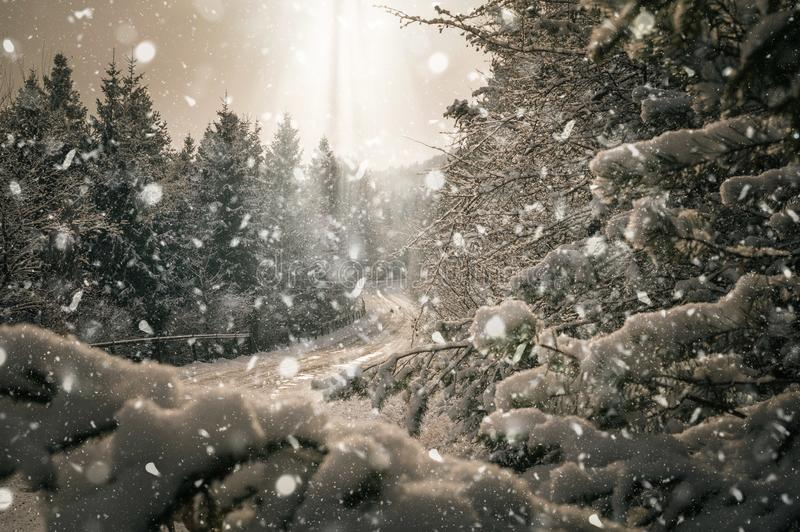 Flying over the snowy landscape. Flying over snowy countryside in Slovakia. Fly over the trees stock photography