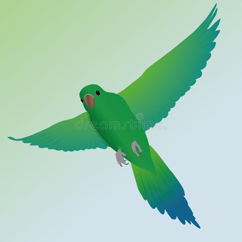 Flying parakeet stock illustration