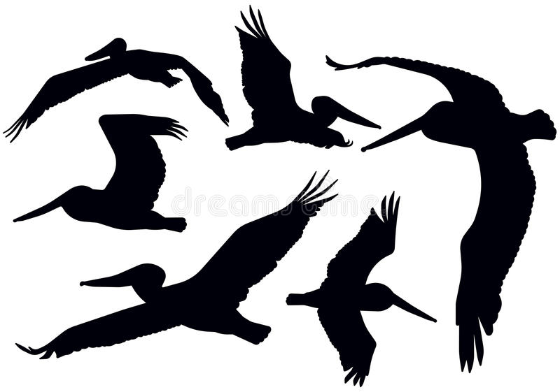 Flying Pelican Silhouettes vector illustration