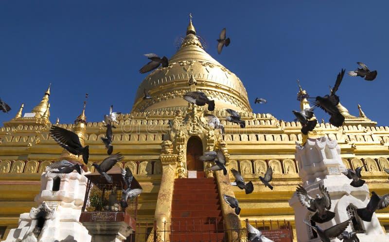 Flying pigeons in front of golden stupa. Flying pigeons in front of a golden stupa at a temple in Bagan, Myanmar stock photo
