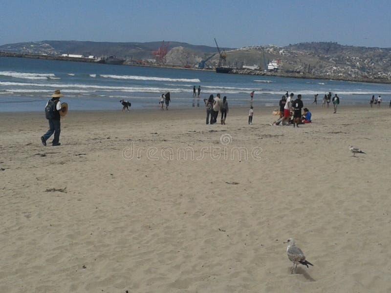 Flying Pigeons Seagull and Pelicans above Cloudy Sea Breakwater Esplanade Beach Ensenada Sea Waves Blue Sky.  stock images