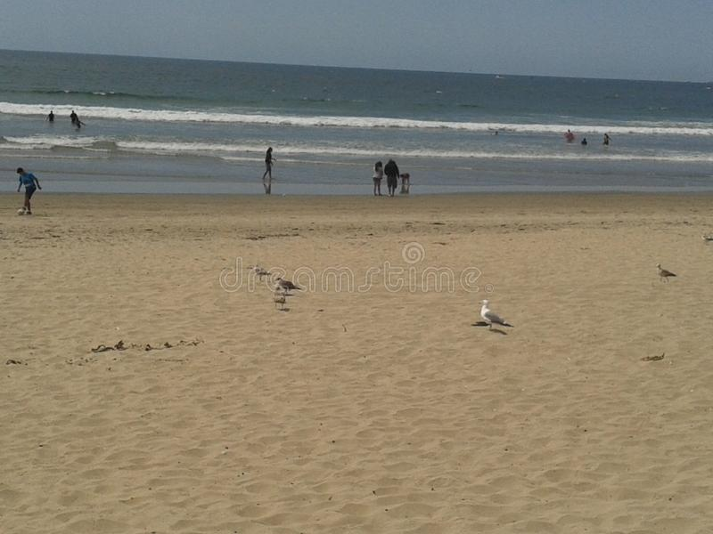 Flying Pigeons Seagull and Pelicans above Cloudy Sea Breakwater Esplanade Beach Ensenada Sea Waves Blue Sky.  stock photo