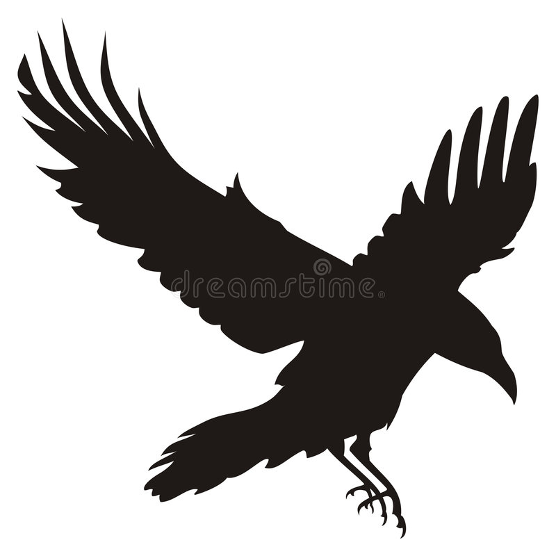 Flying Raven vector illustration