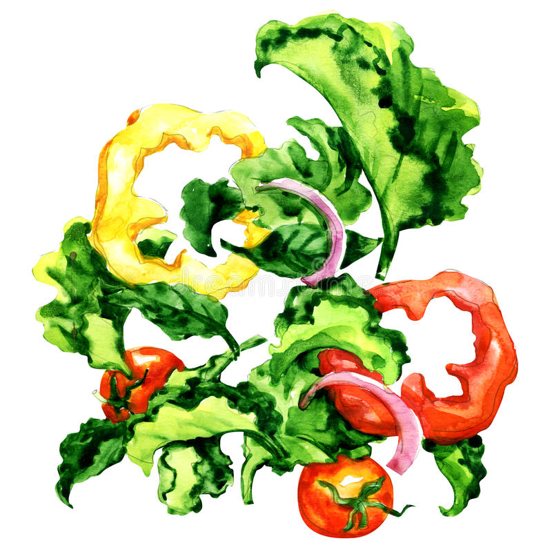 Flying salad with pepper, tomato, onion and green leaves isolated, watercolor illustration on white stock illustration