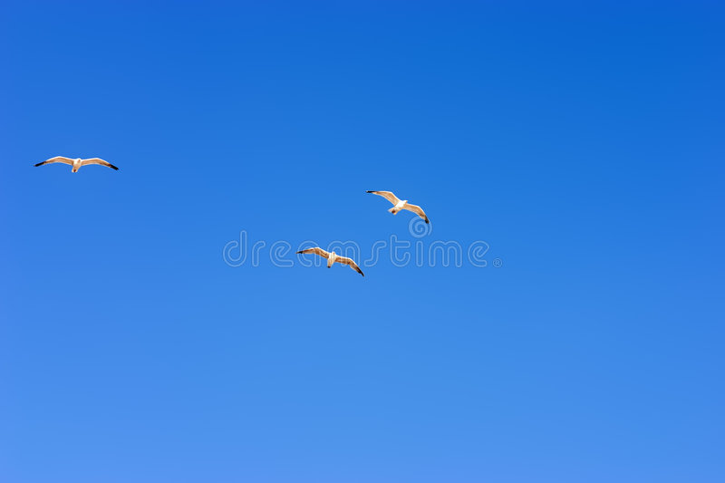 Download Flying seagull stock image. Image of rest, motion, running - 225215