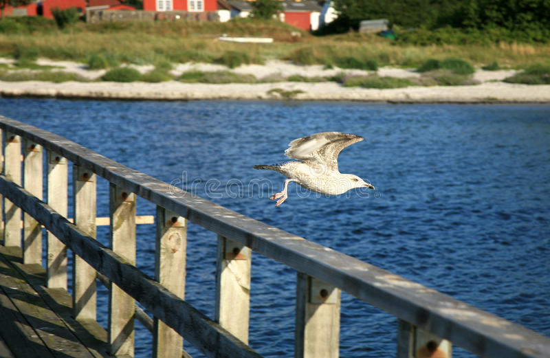 Download Flying seagull stock image. Image of ecology, landing - 26551119