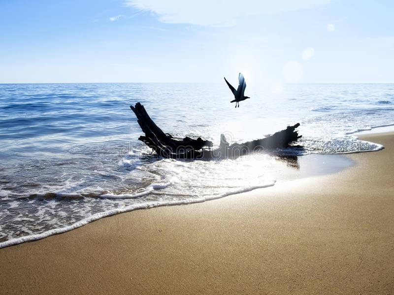 Flying seagull at beach. Tree trunk on golden color sandy beach and flying seagull over clear sky stock photos