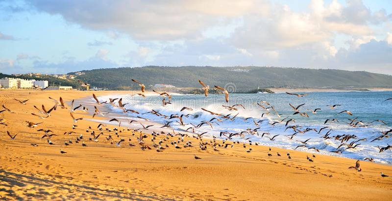 Flying seagulls on beach of Nazare resort stock photography