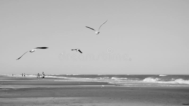 Flying seagulls seascape black and white royalty free stock images