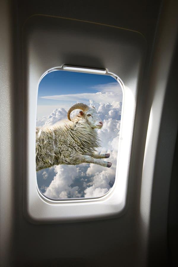 Flying Sheep Royalty Free Stock Image
