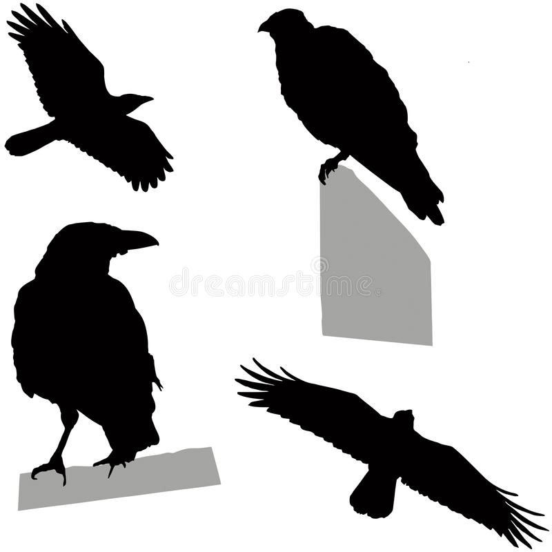 Flying and sitting crow stock vector. Illustration of ...