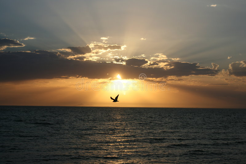 Flying Solo At Sunset royalty free stock image