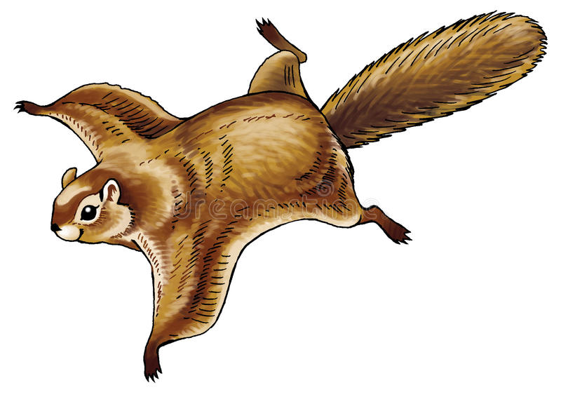 Download The flying squirrel stock illustration. Image of squirrel - 83704715
