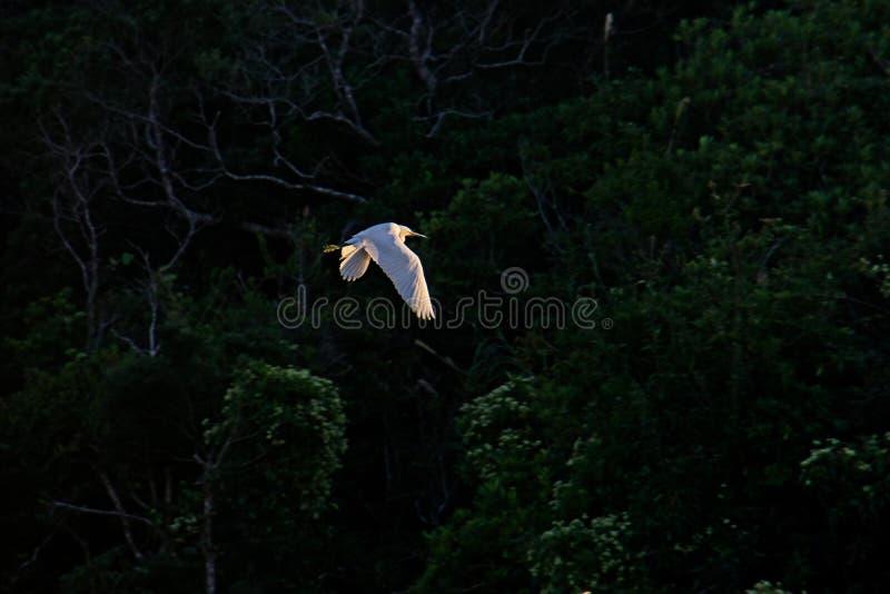 Flying Into The Sunset Free Public Domain Cc0 Image