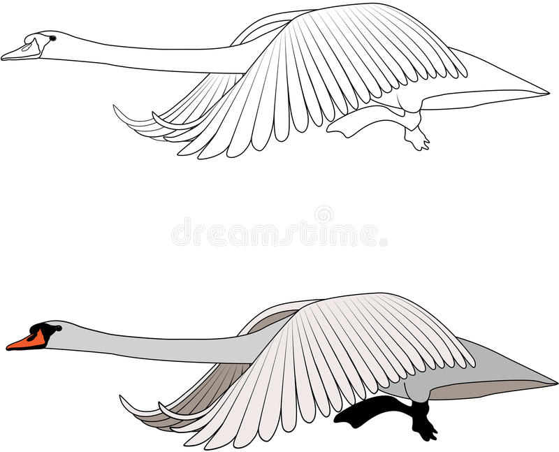 Swan free clipart images image #21206