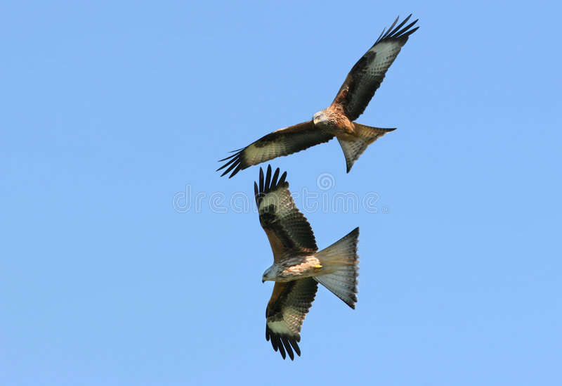 Flying Together stock images