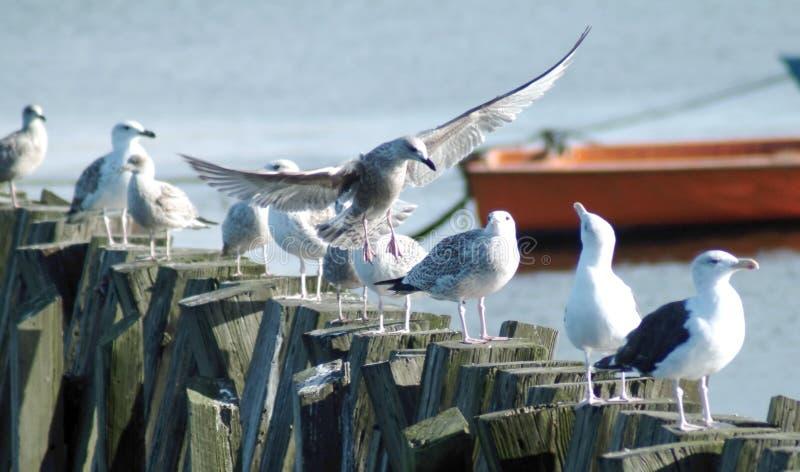 Download Flying visit stock photo. Image of fling, feet, cutting - 20866