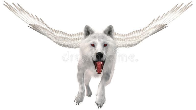 Flying White Wolf, Wings, Isolated. Fantasy science fiction wildlife animal. A white wolf with wings is flying through the air. Mouth is open show fangs and stock image
