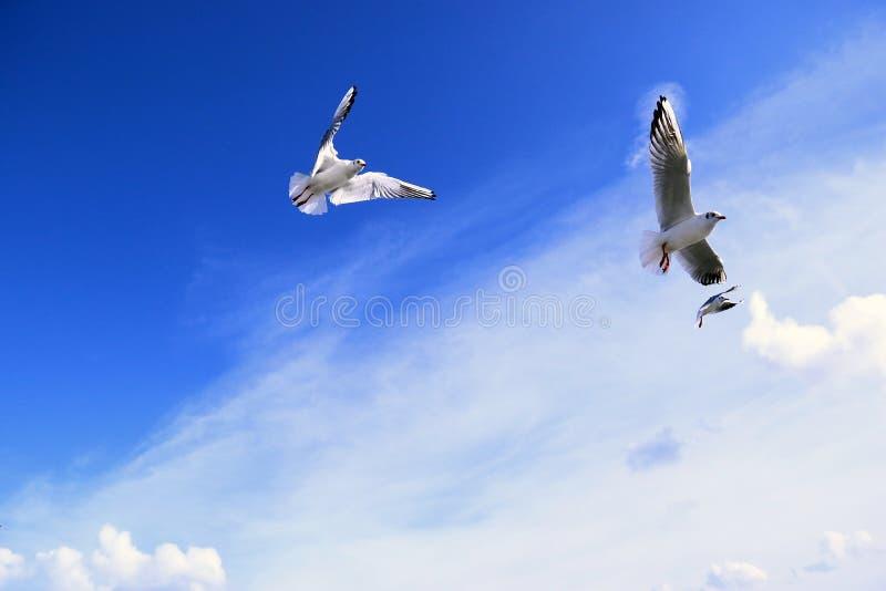 Flyinhimmel för tre seagull fotografering för bildbyråer