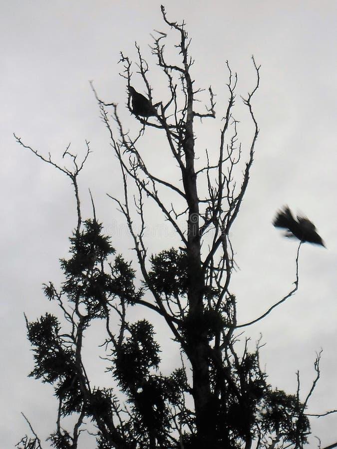 Flykten av en fågel i mörka färger royaltyfri foto