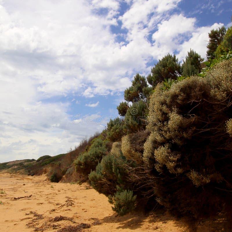 Flynns-пляж стоковые изображения