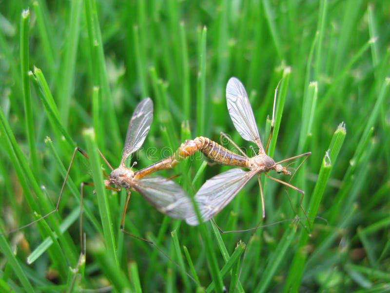 Flys de acoplamiento de la grúa imagen de archivo libre de regalías