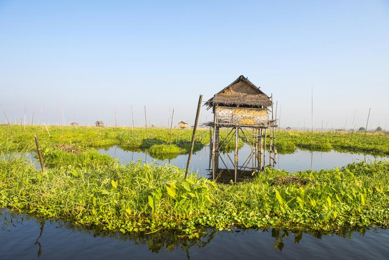 Flytande grönsaksplantager i Inle-sjön i Myanmar royaltyfria bilder