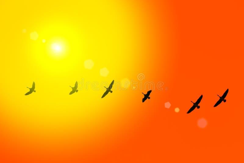 Download Flyttning av löst-gooses fotografering för bildbyråer. Bild av migrating - 37345023