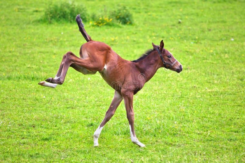 Foal ευθυμιών στοκ φωτογραφία με δικαίωμα ελεύθερης χρήσης