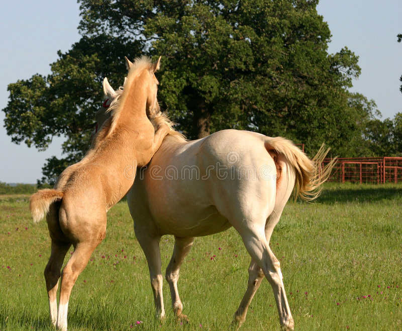 foal εύθυμο στοκ φωτογραφία με δικαίωμα ελεύθερης χρήσης