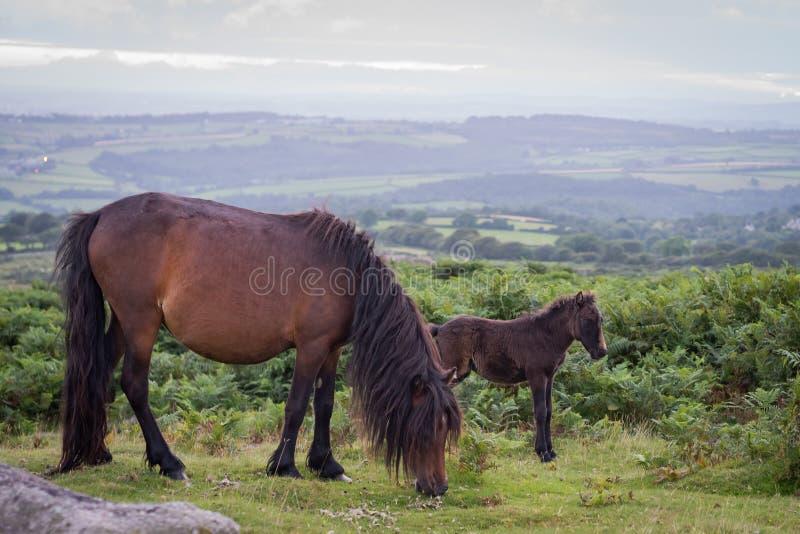 foal η φοράδα της στοκ φωτογραφία με δικαίωμα ελεύθερης χρήσης
