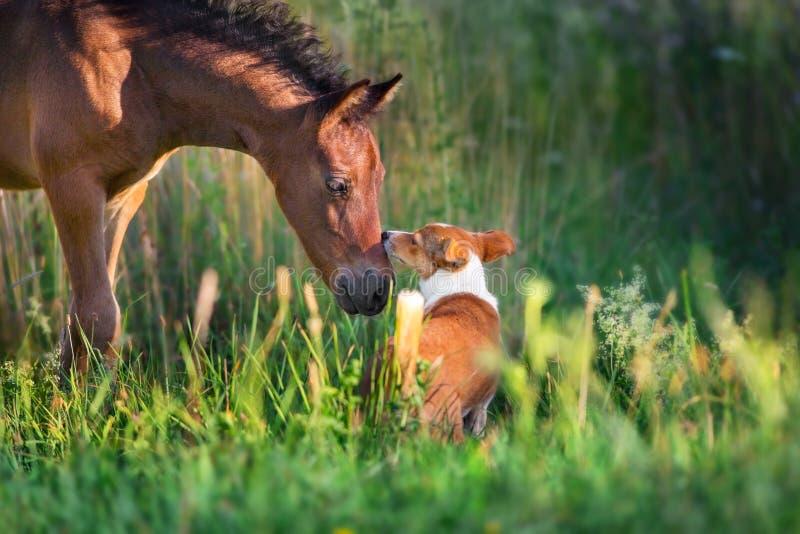 Foal με το σκυλί στοκ εικόνες με δικαίωμα ελεύθερης χρήσης