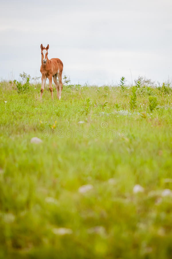 foal νεογέννητο στοκ φωτογραφίες με δικαίωμα ελεύθερης χρήσης