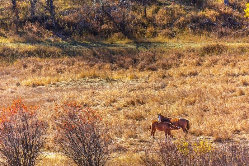 Foal περιποίησης στον τομέα στοκ εικόνα με δικαίωμα ελεύθερης χρήσης
