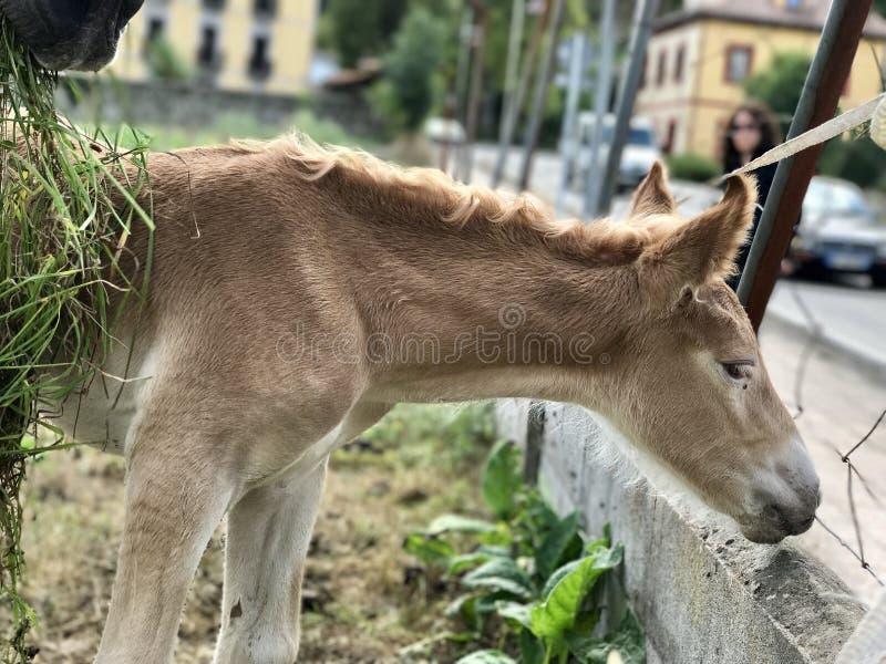 foal που ο τοίχος στοκ εικόνες