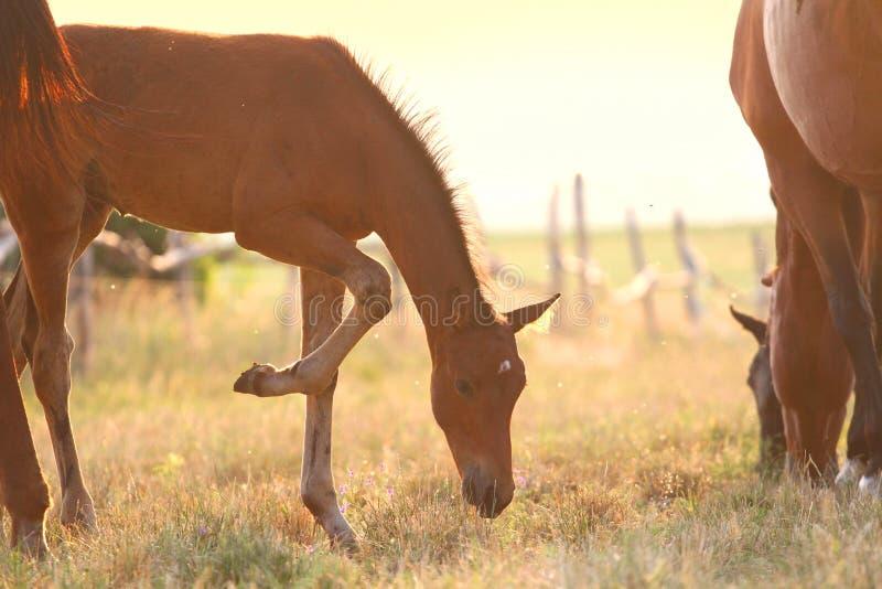 Foal στο λιβάδι στοκ φωτογραφία με δικαίωμα ελεύθερης χρήσης