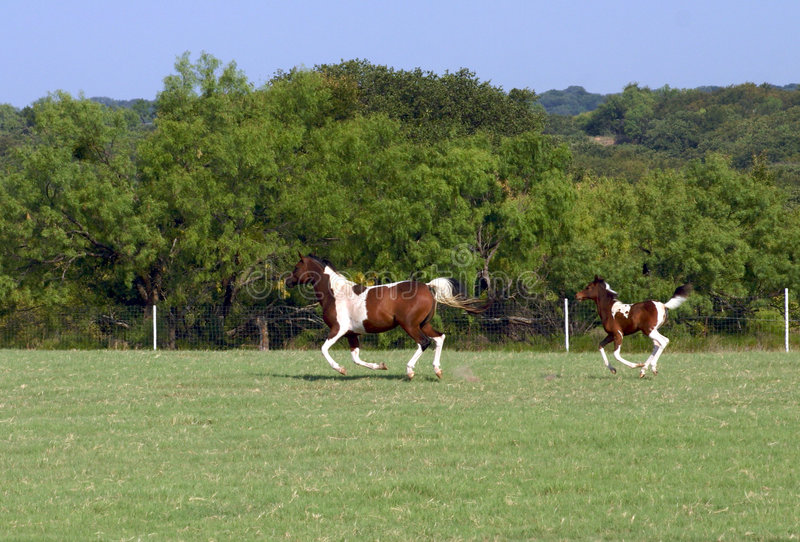 foal τρέξιμο φοράδων στοκ εικόνα με δικαίωμα ελεύθερης χρήσης
