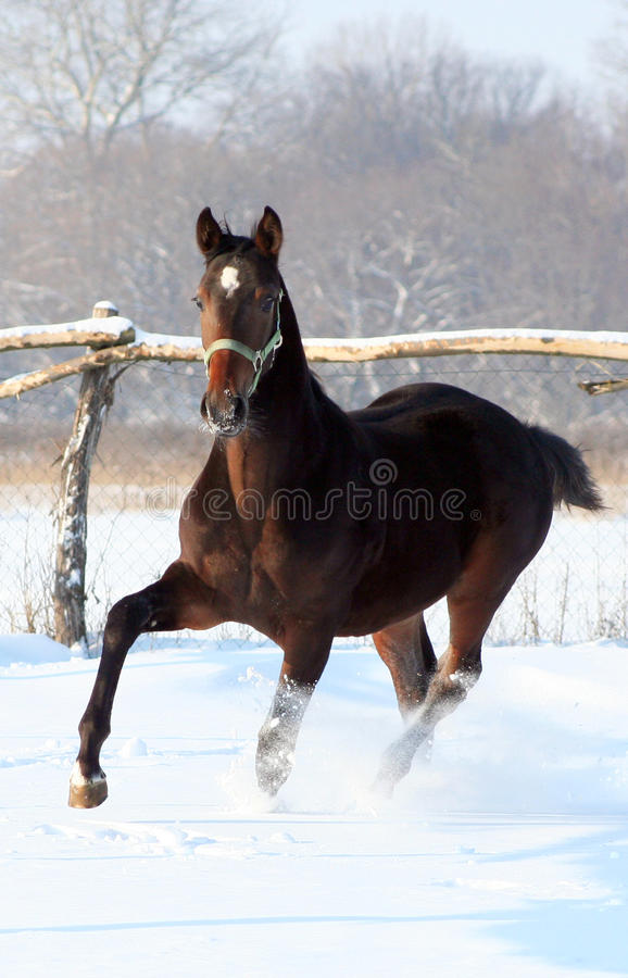 Download Foal Royalty Free Stock Photos - Image: 12264798