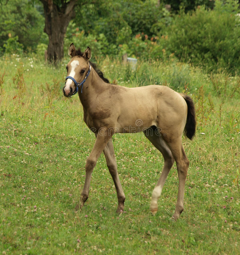 Foal stock images