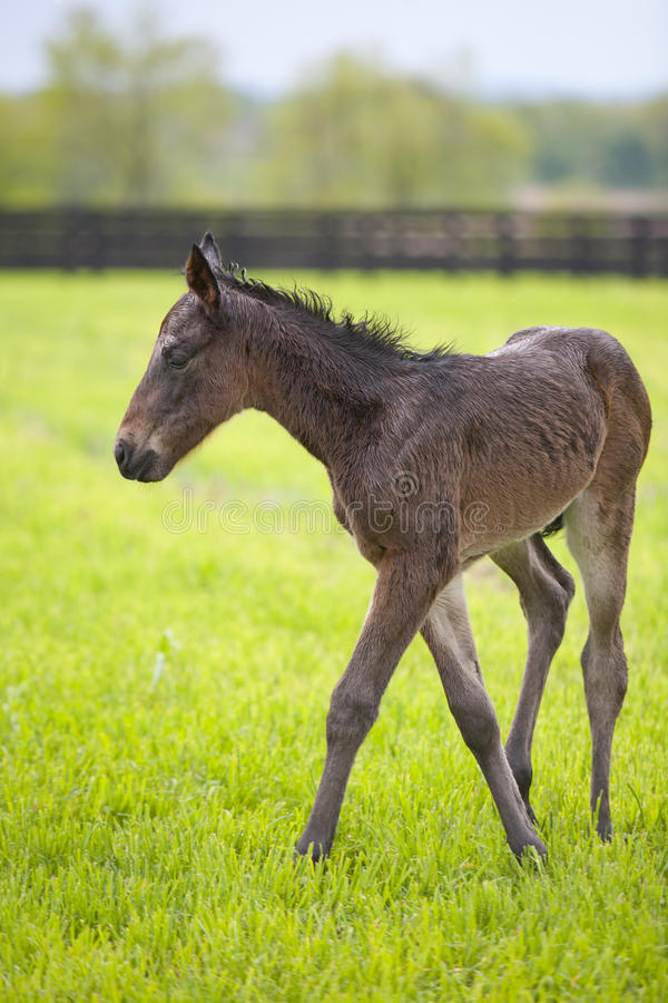 Download Foal stock photo. Image of grass, vertical, green, farm - 19422728