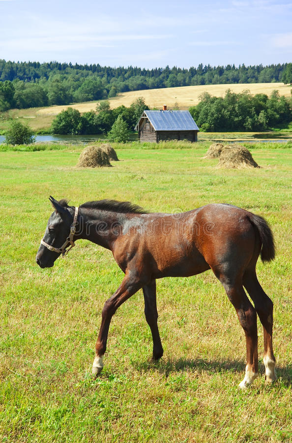 Free Foal Royalty Free Stock Photography - 20474397